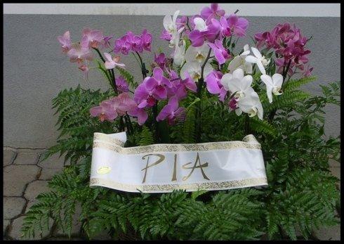 Cesto con felci e phalenopsis