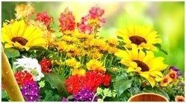 fiori spontanei