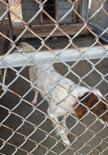 Pet Boarding Pembroke, NC
