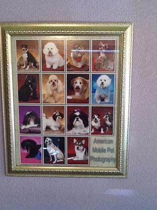 Dog Groomer Abilene, TX