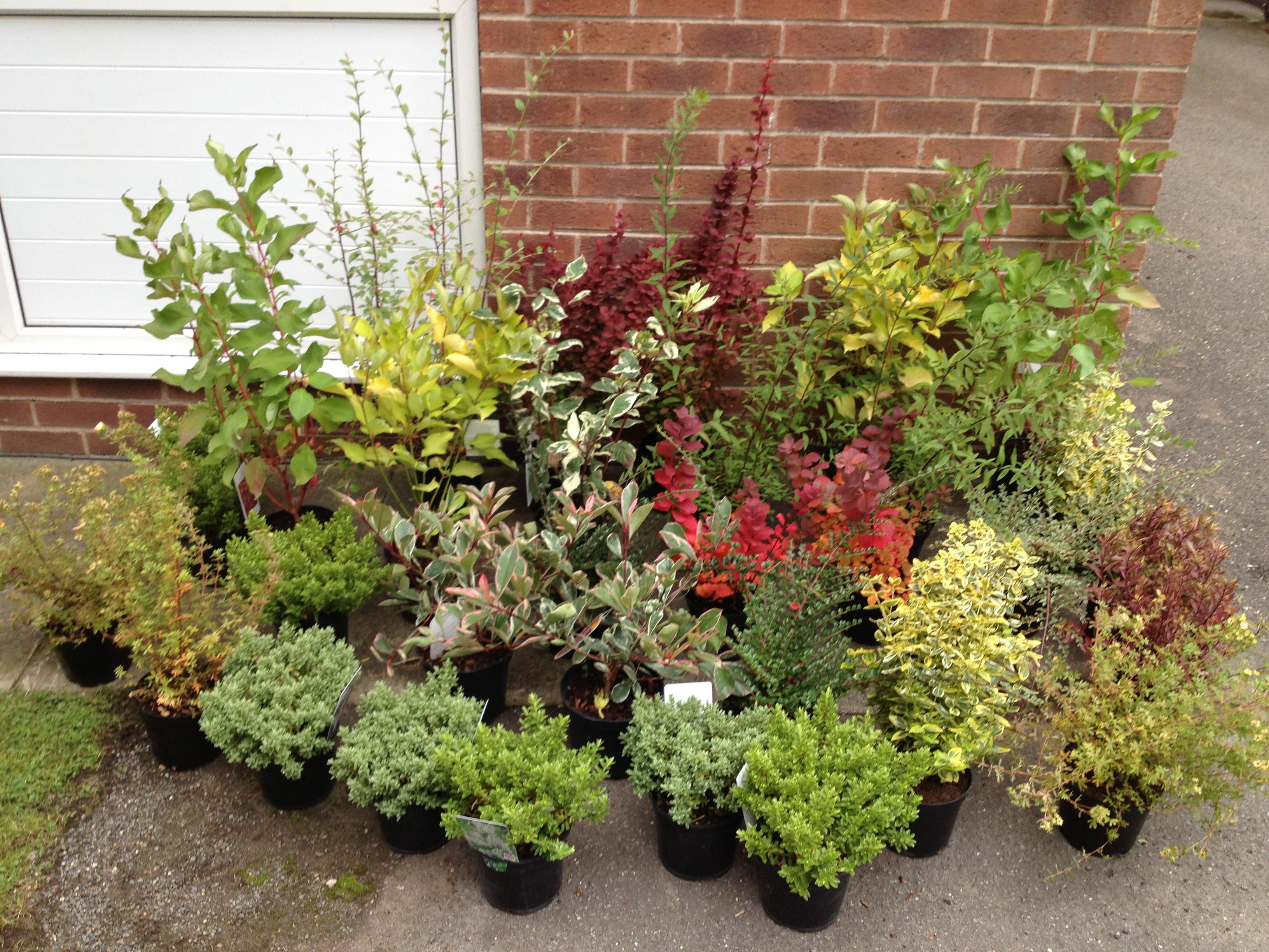 decorating plants