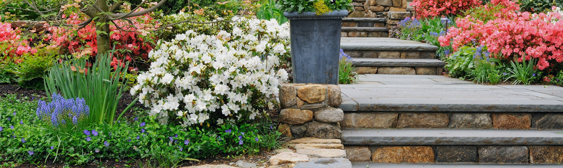 Regular gardening services in nottingham jepson for Garden design nottingham