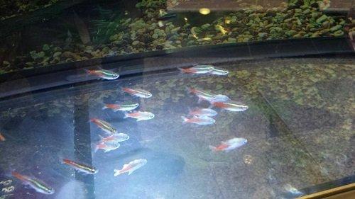 dei pesci in un acquario