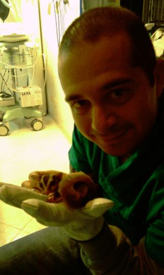 animali esotici, cura animali esotici, studio veterinario