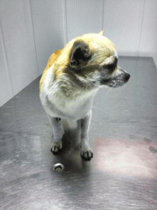 trattamento contro pulci, trattamento contro zecche, trattamenti veterinari