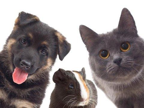prodotti per animali rezzato