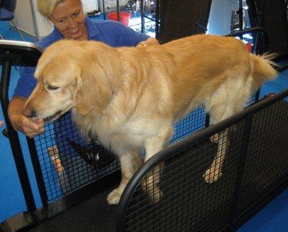 Dog Exercise Equipment