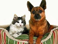 Visite veterinarie