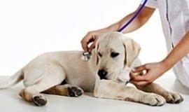 Visite specialistiche per cani la spezia, esami di laboratorio per animali sp