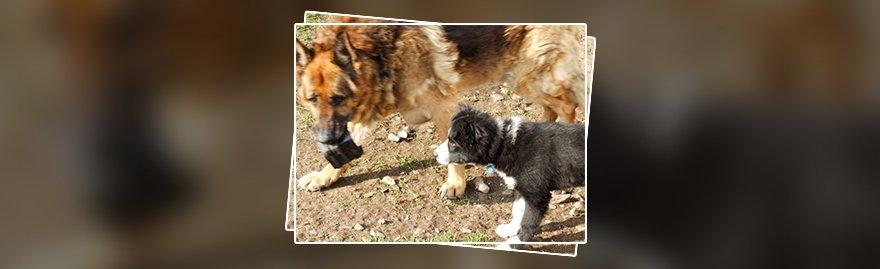 Dog training and advice