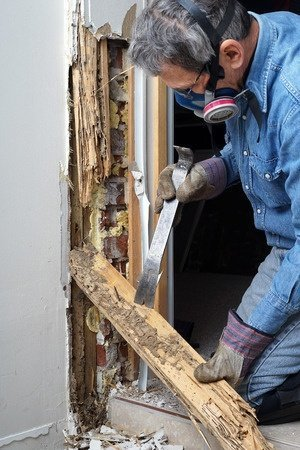 Termites Can Cause Expensive Damage to Your Home