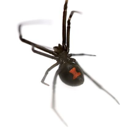 Get Rid of Spiders Fast with Avenge Pest Control