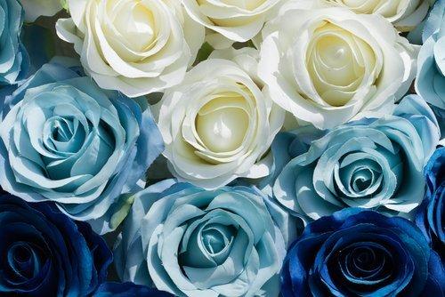 delle rose di colore azzurro e bianco