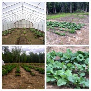 Alaska Farming.jpg