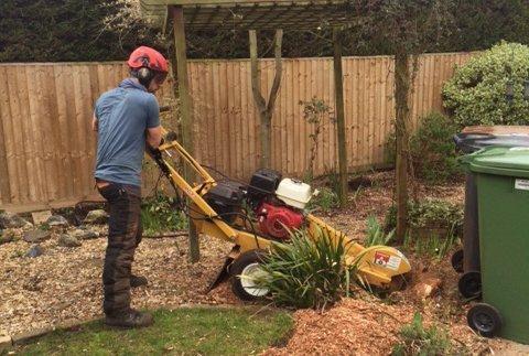 stump removals