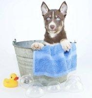 Toelettatura per cani e gatti