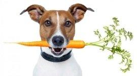 articoli per animali, manitoba, toelettatura a forbice