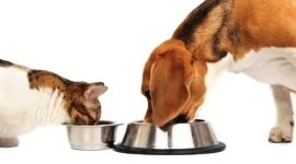 croccantini per gatti, cibo per gatti, cucce per gatti, cibo per cani