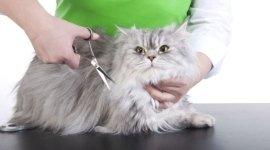 toelettatura gatti, lavaggio cani, toelettatura animali