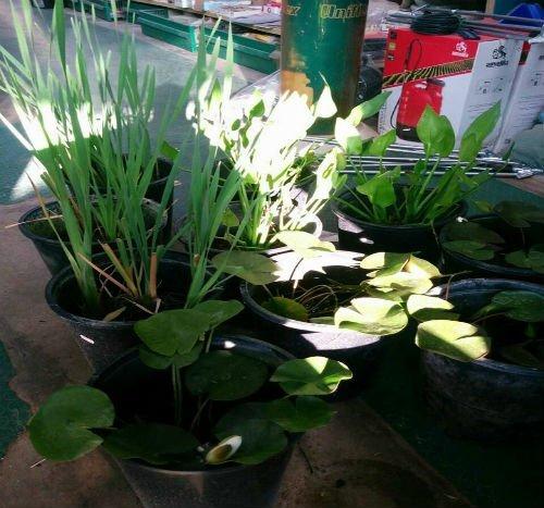 vasi con piante in vendita
