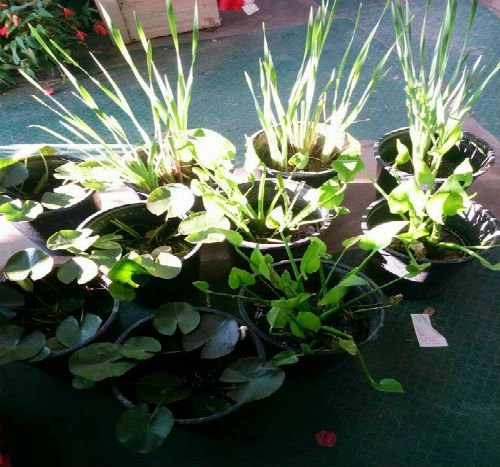 vasi con piante