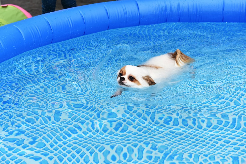 cane in piscina gonfiabile