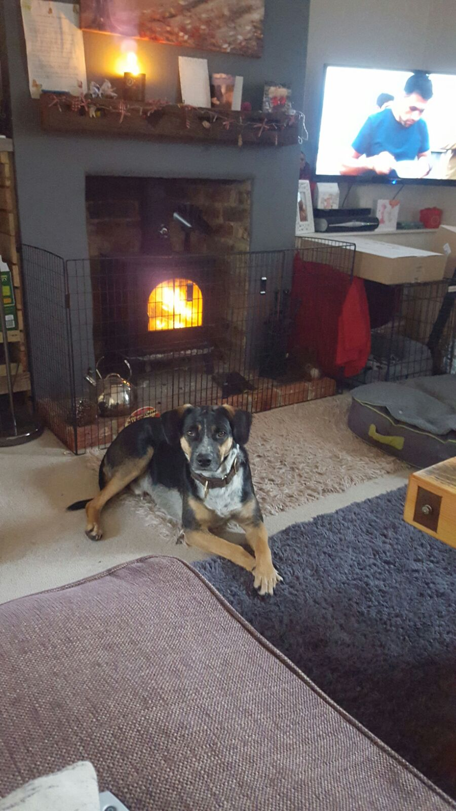 dog in front of the fireplace