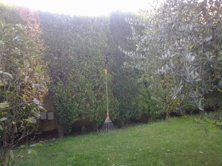 giardinaggio e potatura