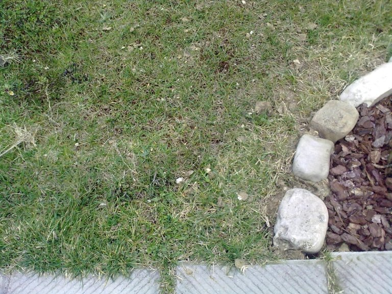 rigenerazione prato giardino