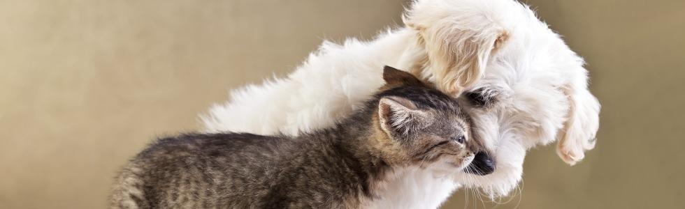 veterinario cani e gatti