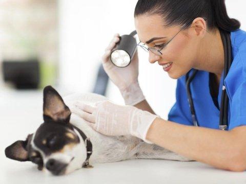 reparto chirurgia veterinario