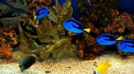pesci acqua dolce, vendita acquari, pesci tropicali