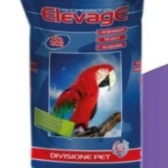 ElevagE pappagalli pig