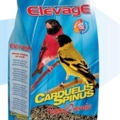 Elevage Carduelis spinus