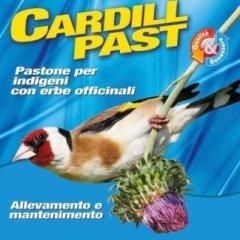 ElevagE Cardill Past