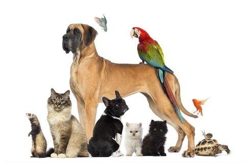 Animali domestici