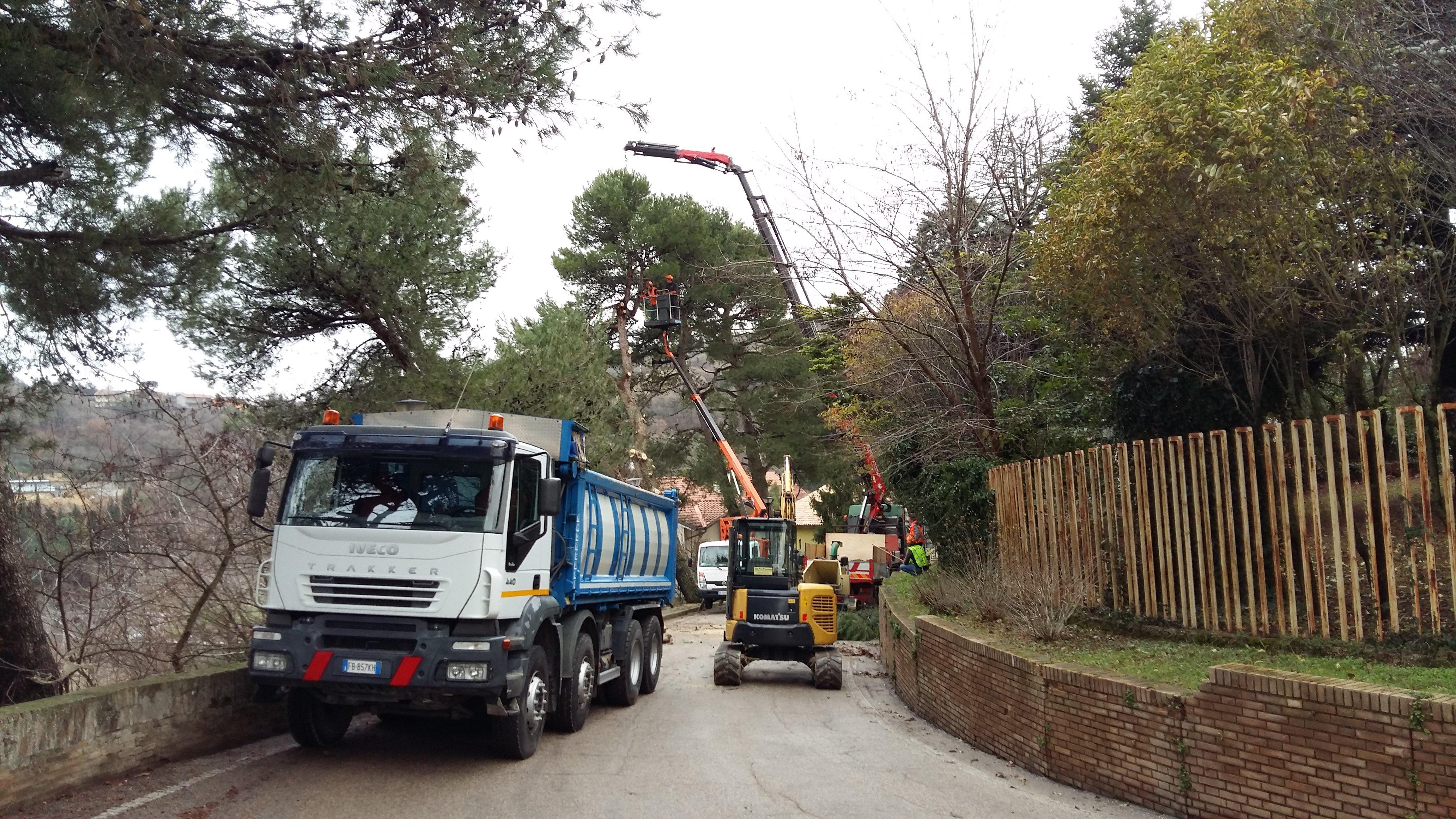 un camion carico di tronchi d'albero