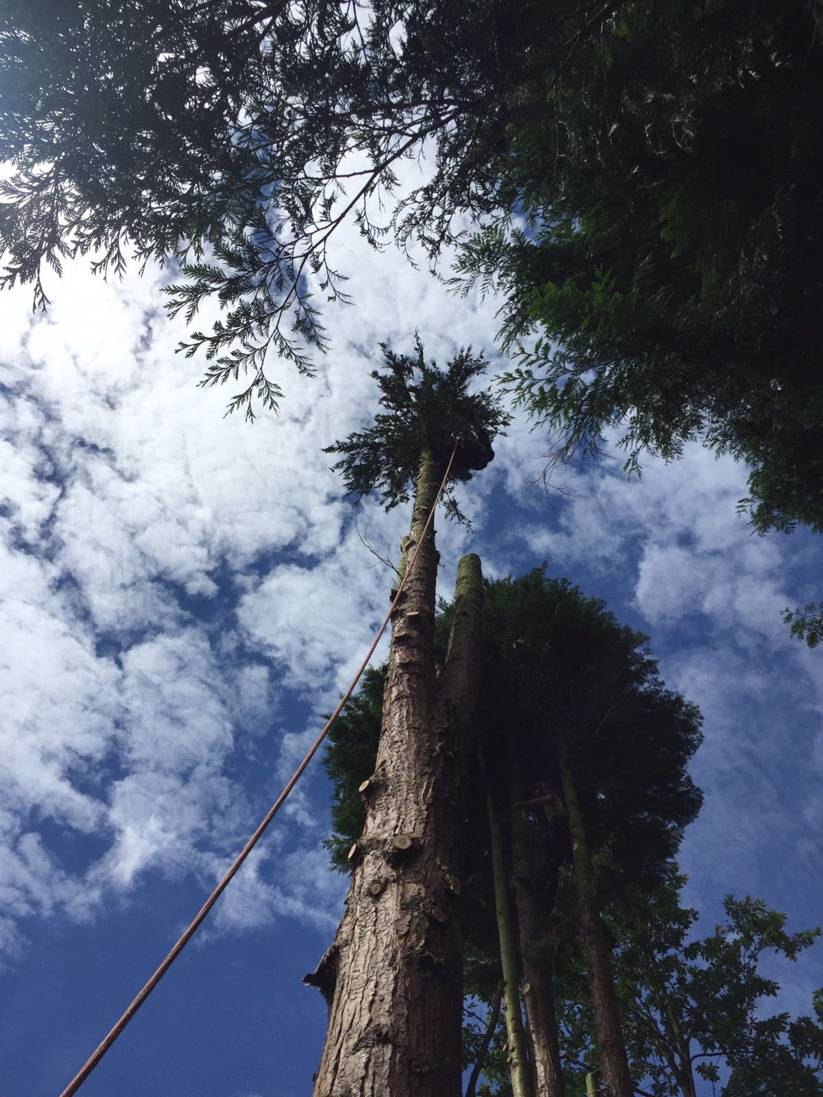 tree being cut