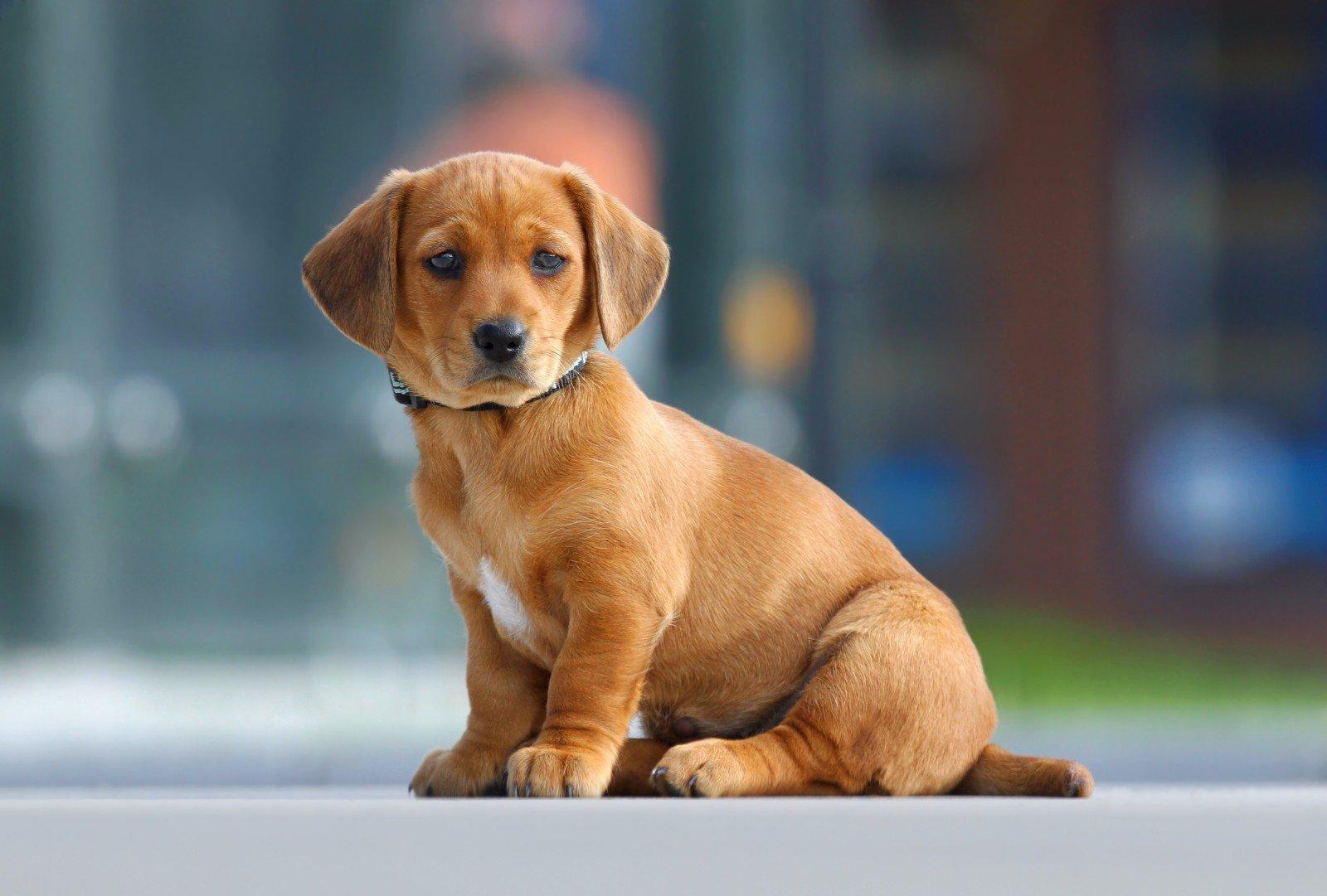 Lo sguardo di un cane triste