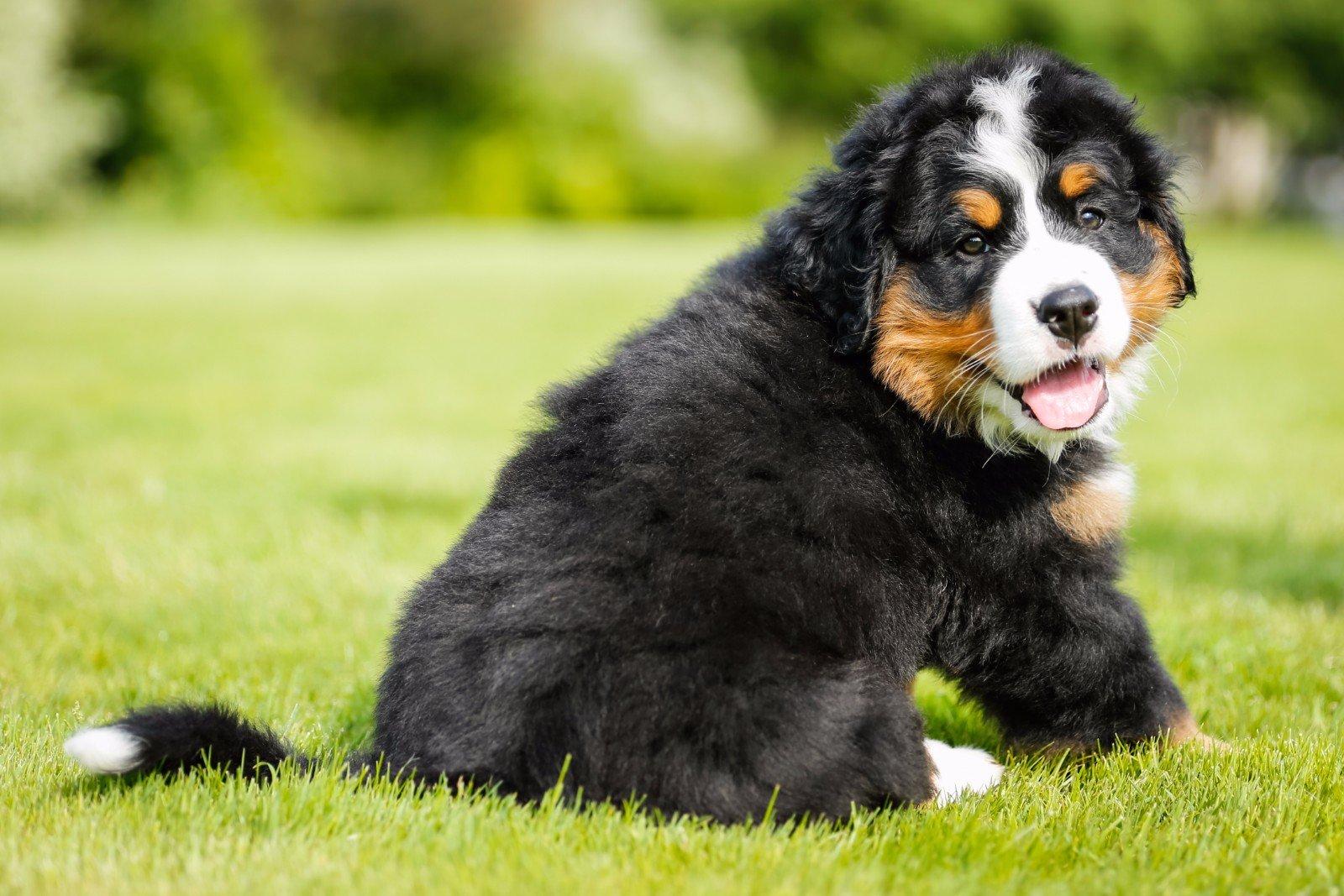 Cucciolo di cane in un giardino