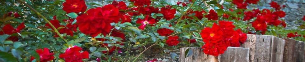 Realizzazione Giardini Varallo