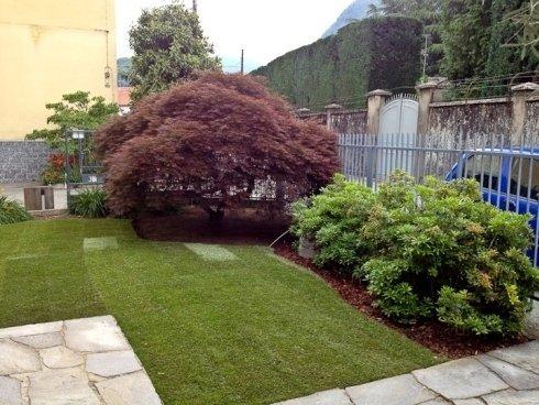 piante sempreverdi e siepi