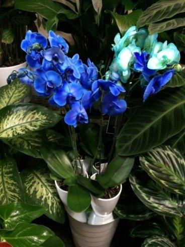 fiori blu, promozioni speciali, esperienza e professionalità
