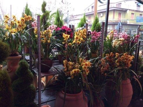 promozioni speciali, consegne a domicilio, piante e fiori