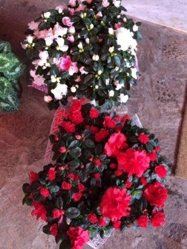 composizioni per eventi, fiori de simone, promozioni speciali