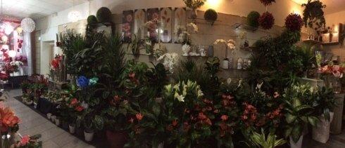 il negozio, vegetali, fiori colorati