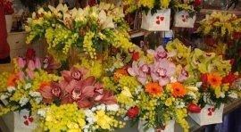 composizioni, fiori, piante di ogni colore