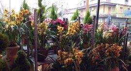 ampia scelta, vegetazione, fiori da balcone