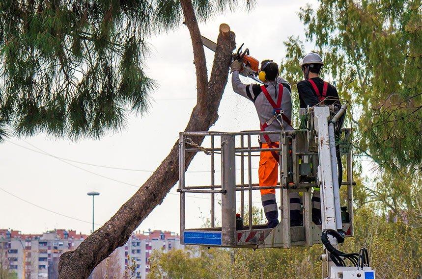 professional tree cutters cutting tree trunks