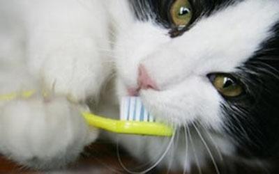 Odontostomatologia veterinaria
